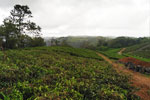 13 Acres of land in vagamon